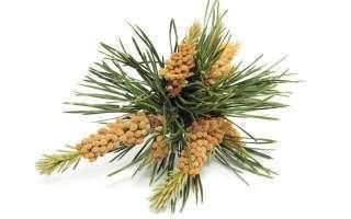 Bachbloesem pine of grove den